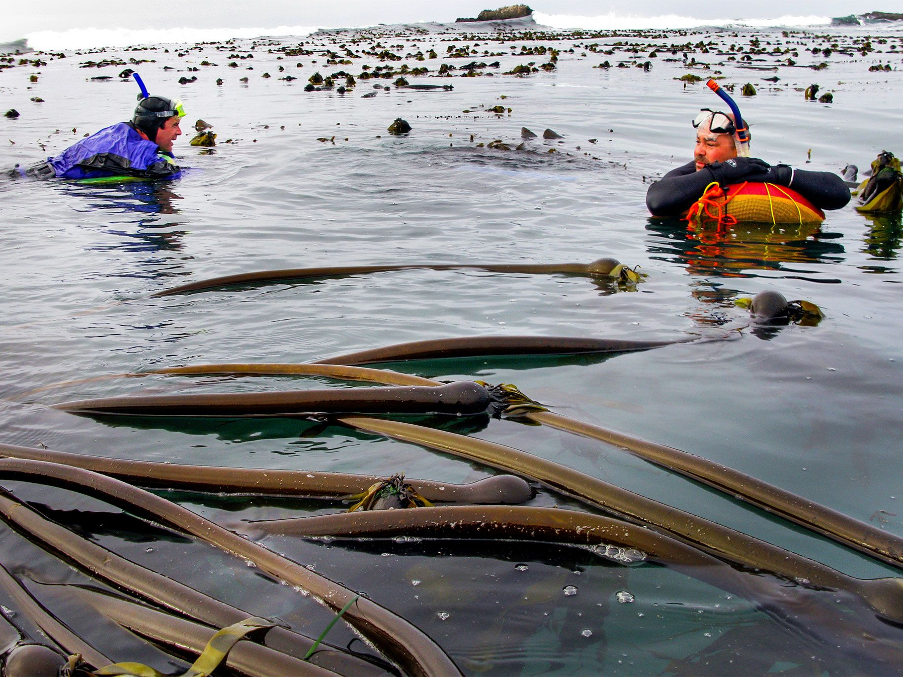 Prior to the ban on diving for abalone, divers would look for the shellfish in the kelp-filled waters of places like Van Damme State Park in Mendocino County.