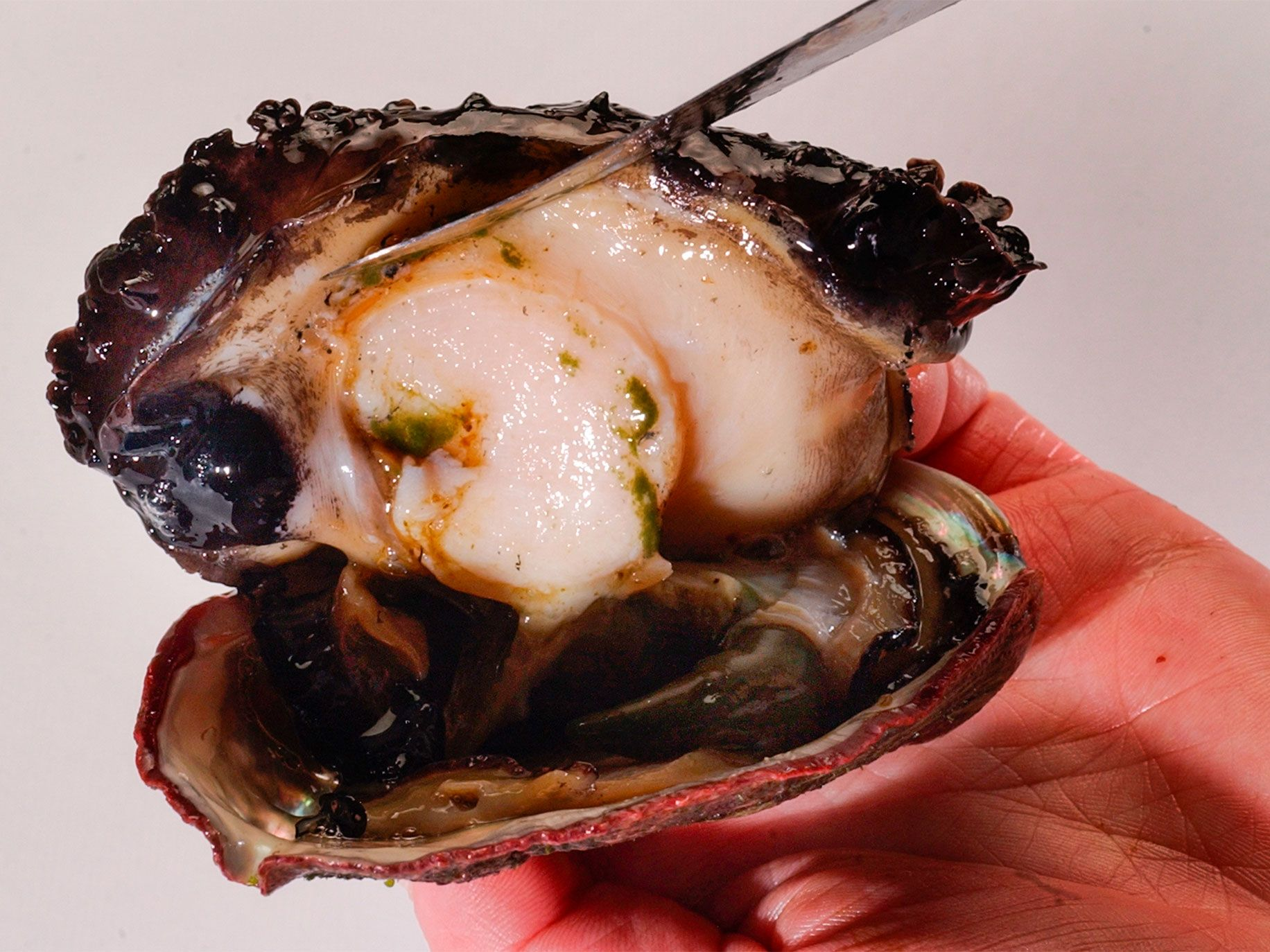 The abalone's foot is prized as a delicacy, often just cracker-battered and pan fried.
