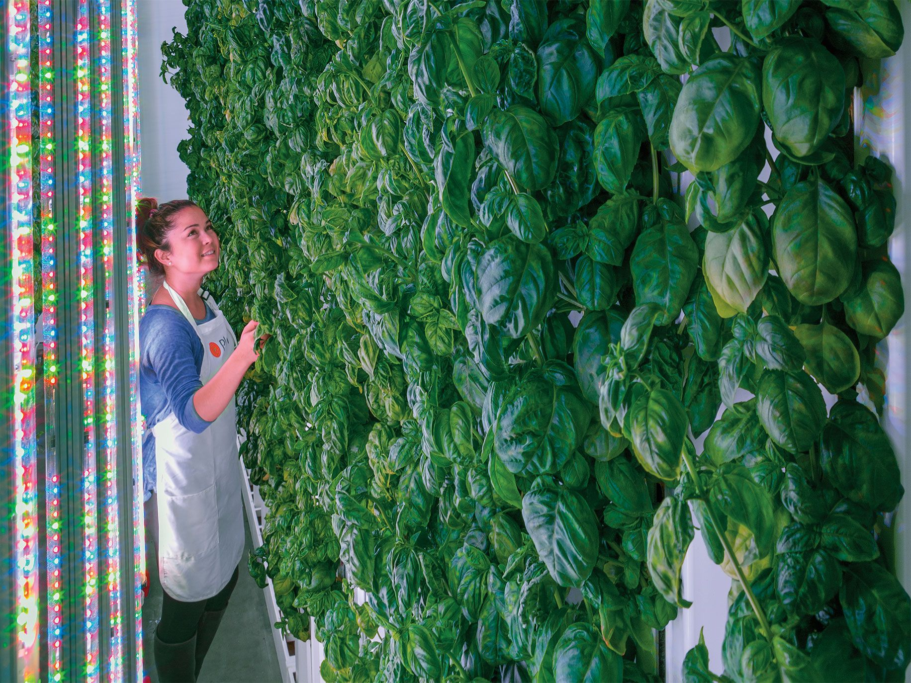 Under the glow of LED light arrays, Plenty's crops grow on 20-foot-tall towers inside a climate-controlled facility in South San Francisco.