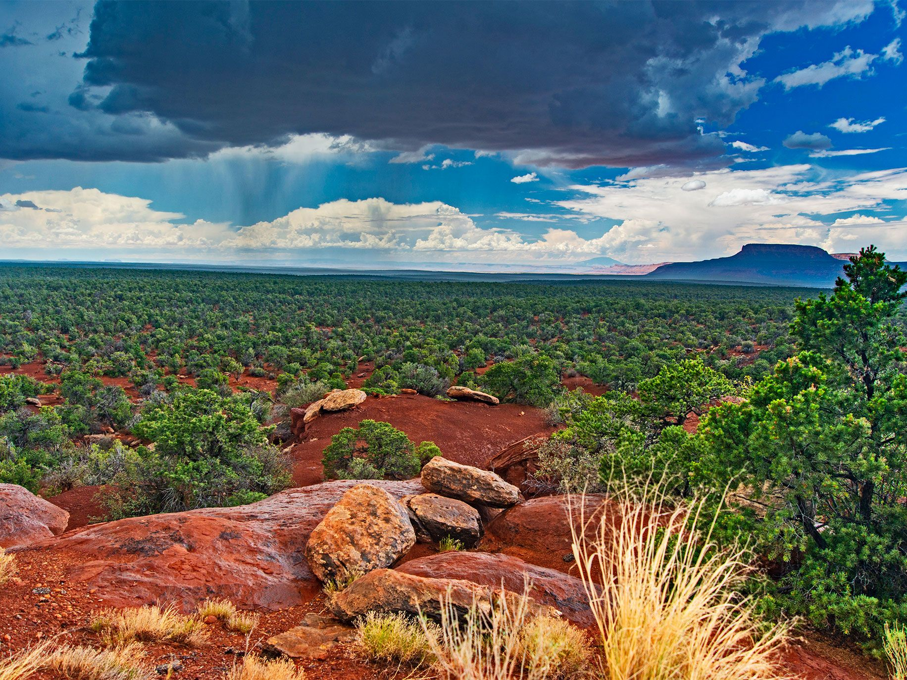 A summer thundershower drifts across a desert forest on Cedar Mesa, an area previously protected as part of the Bears Ears National Monument. Navajo Mountain, a Native American sacred site, rises in the far distance.