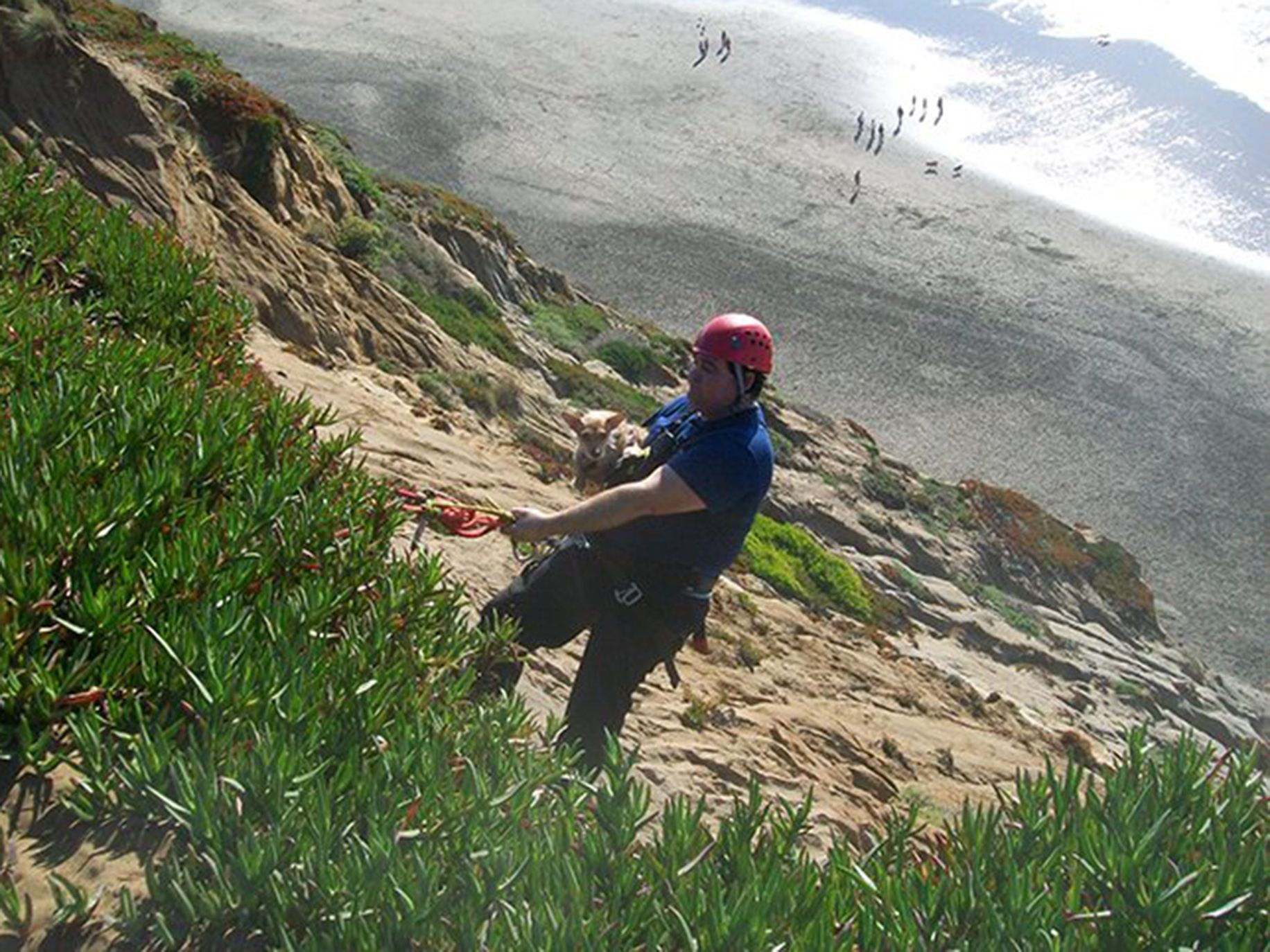 A first responder pulls Foxie from the cliffs of Fort Funston in San Francisco.