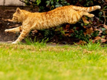 A feral cat runs free in Sage Park, two miles from Disneyland Park in Anaheim, California.