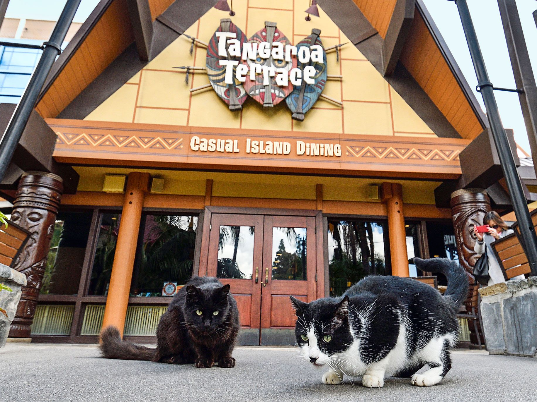 Sammy and Pepper, two feral cats who live at the Disneyland Resort, sit in front of Trader Sam's restaurant as an onlooker takes their picture.
