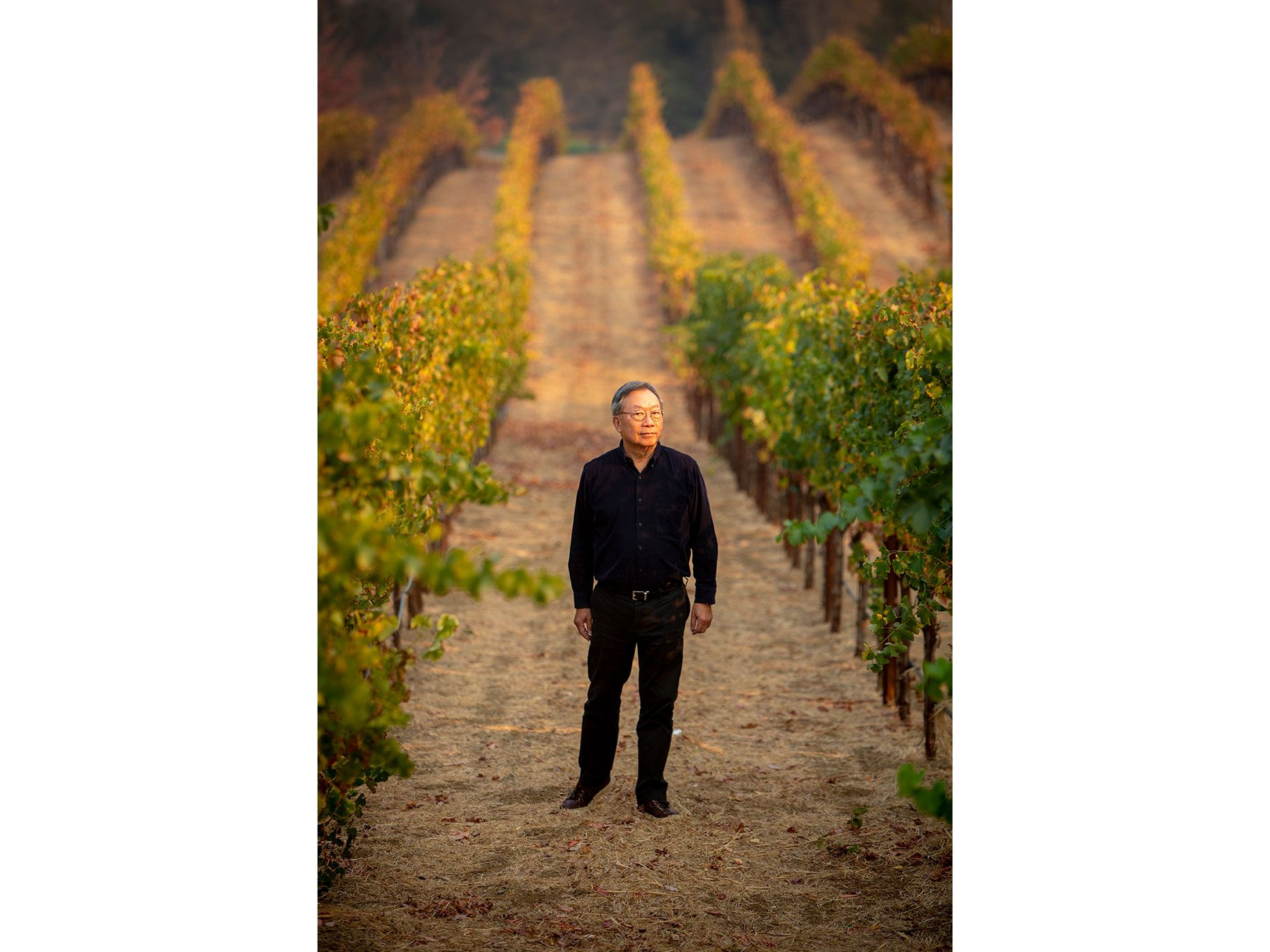 Stanley Cheng looks over his vineyard in Napa Valley.