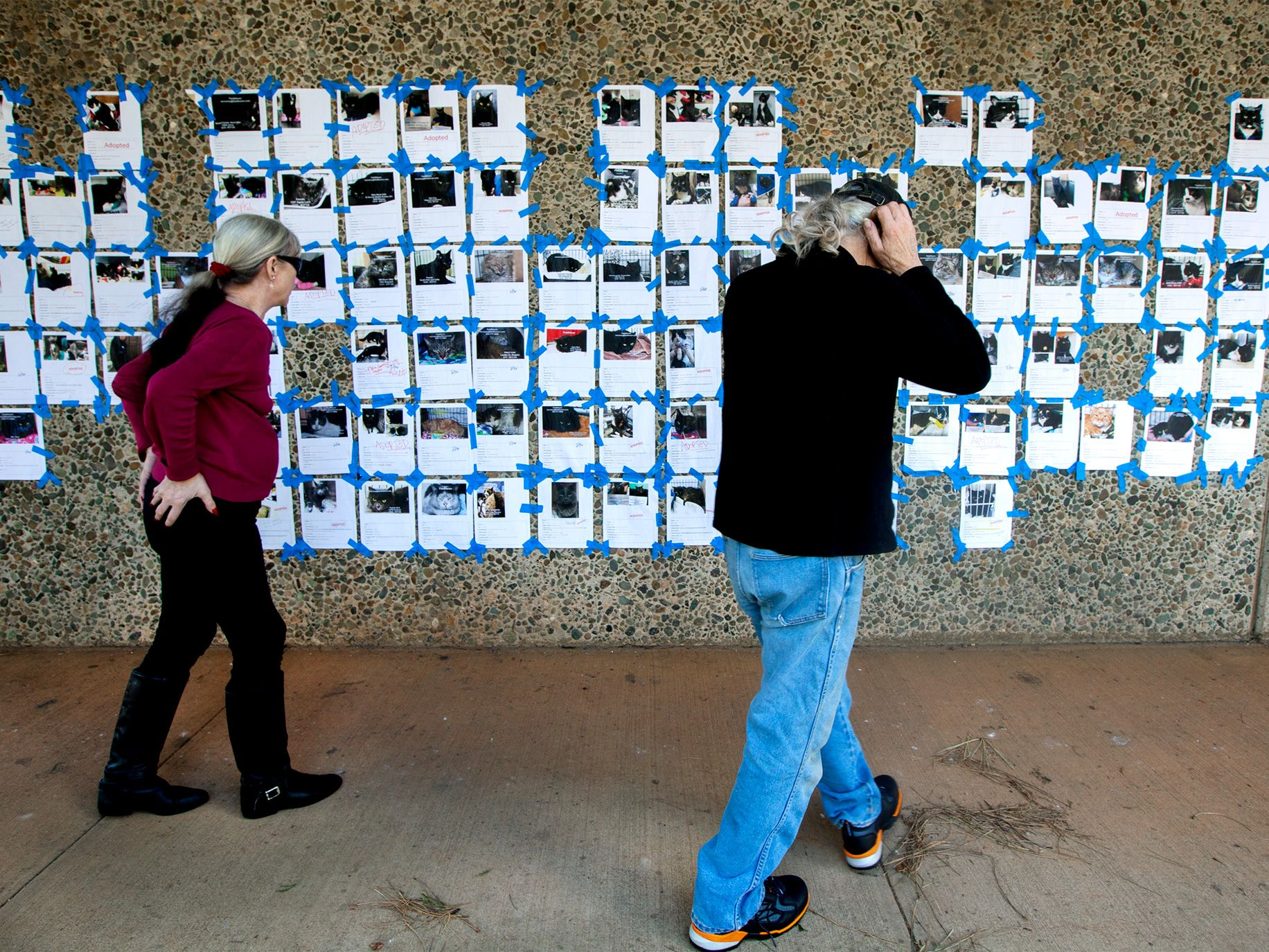 Paradise residents Wendy Cobb and Marc Darling search for their two missing cats on a message board at the town's Ponderosa Elementary School.