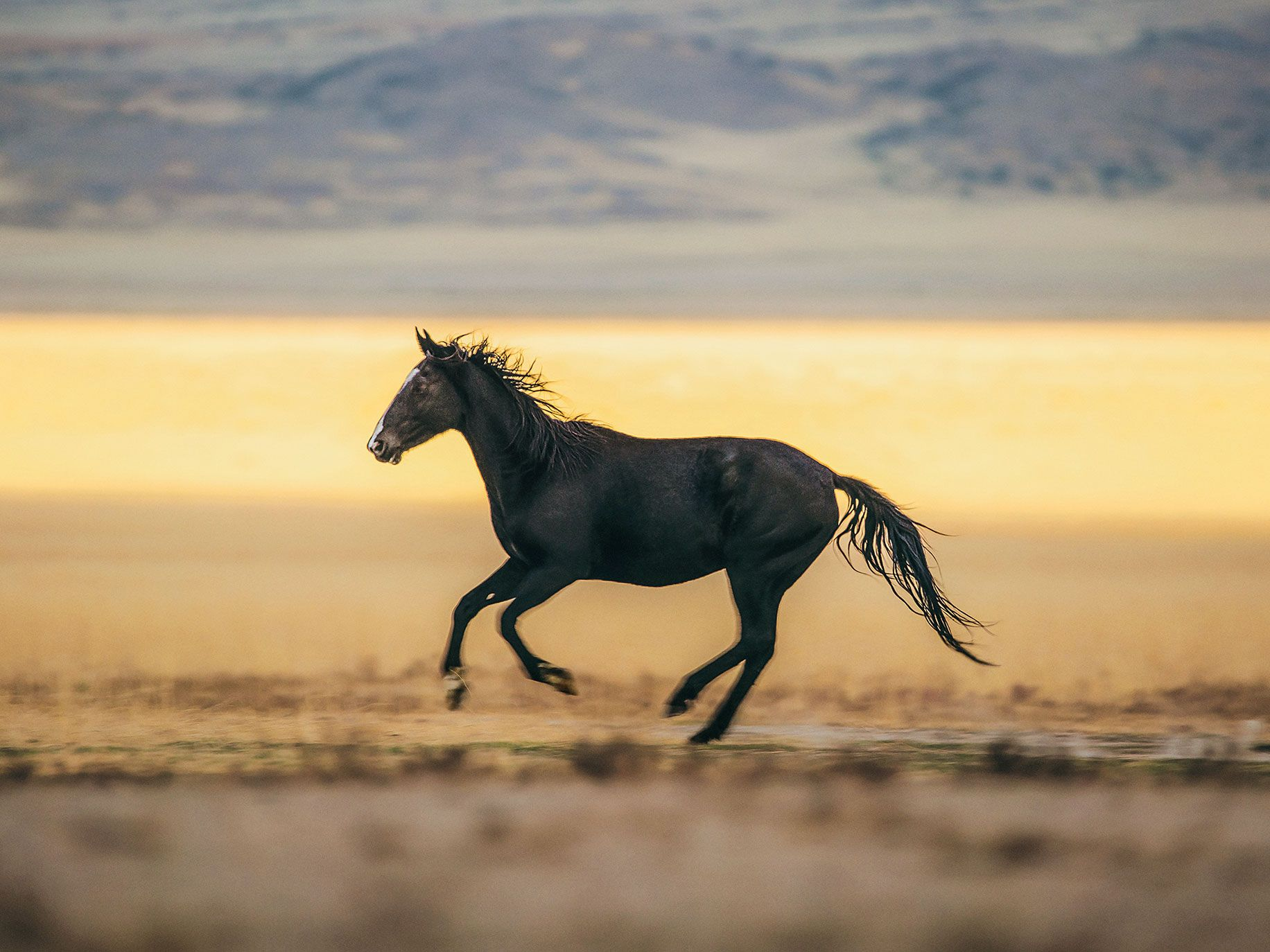 Feral Horses, Fierce Controversy