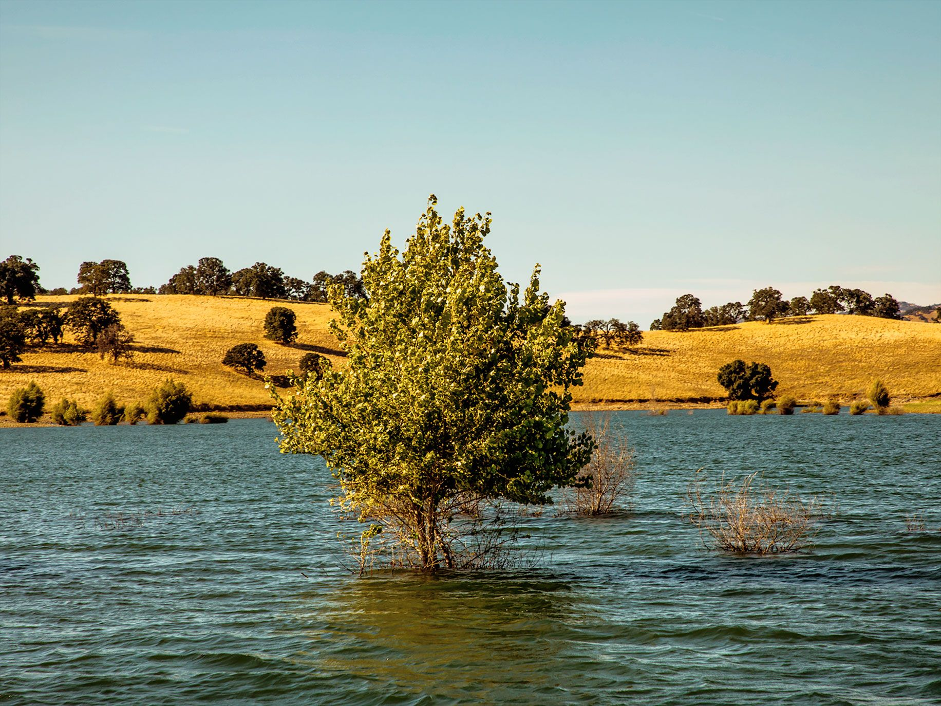 Cottonwood trees sprout from the lake bed when water levels drop during dry months.