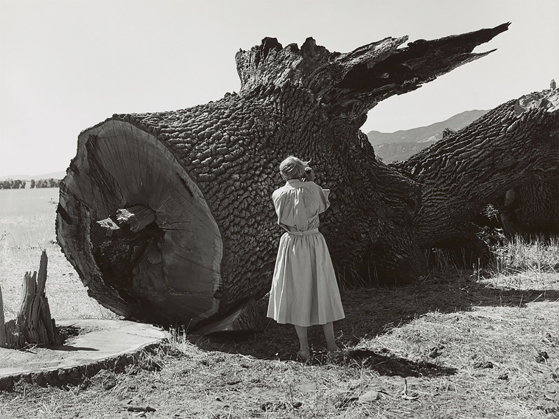 Dorothea Lange photographing a tree for the Death of a Valley series, taken by Pirkle Jones.