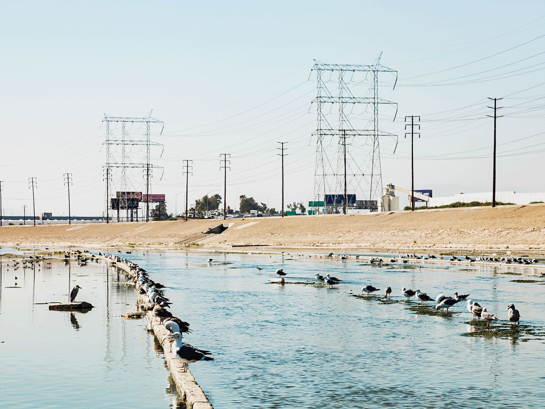 Birds linger in the Maywood area of the Los Angeles River.