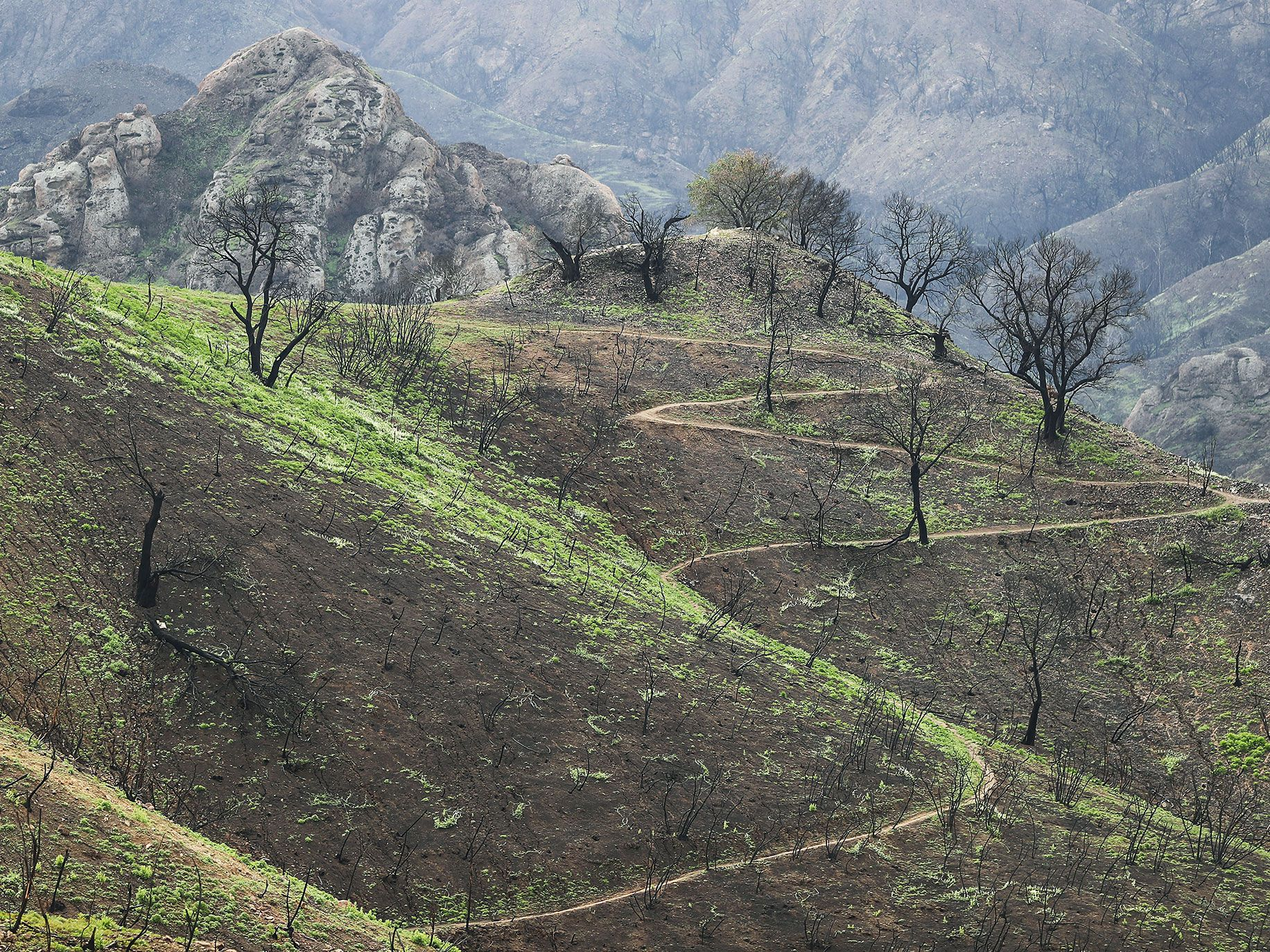 New vegetation sprouts in a Woolsey Fire burn area at Malibu Creek State Park in the Santa Monica Mountains on February 27, 2019 near Malibu, California. Significant winter rainfall, after years of drought, has helped spur fresh growth in the burn areas which measure more than 150 square miles. The fire ignited November 8, 2018 and burned almost half the total land in the Santa Monica Mountains.