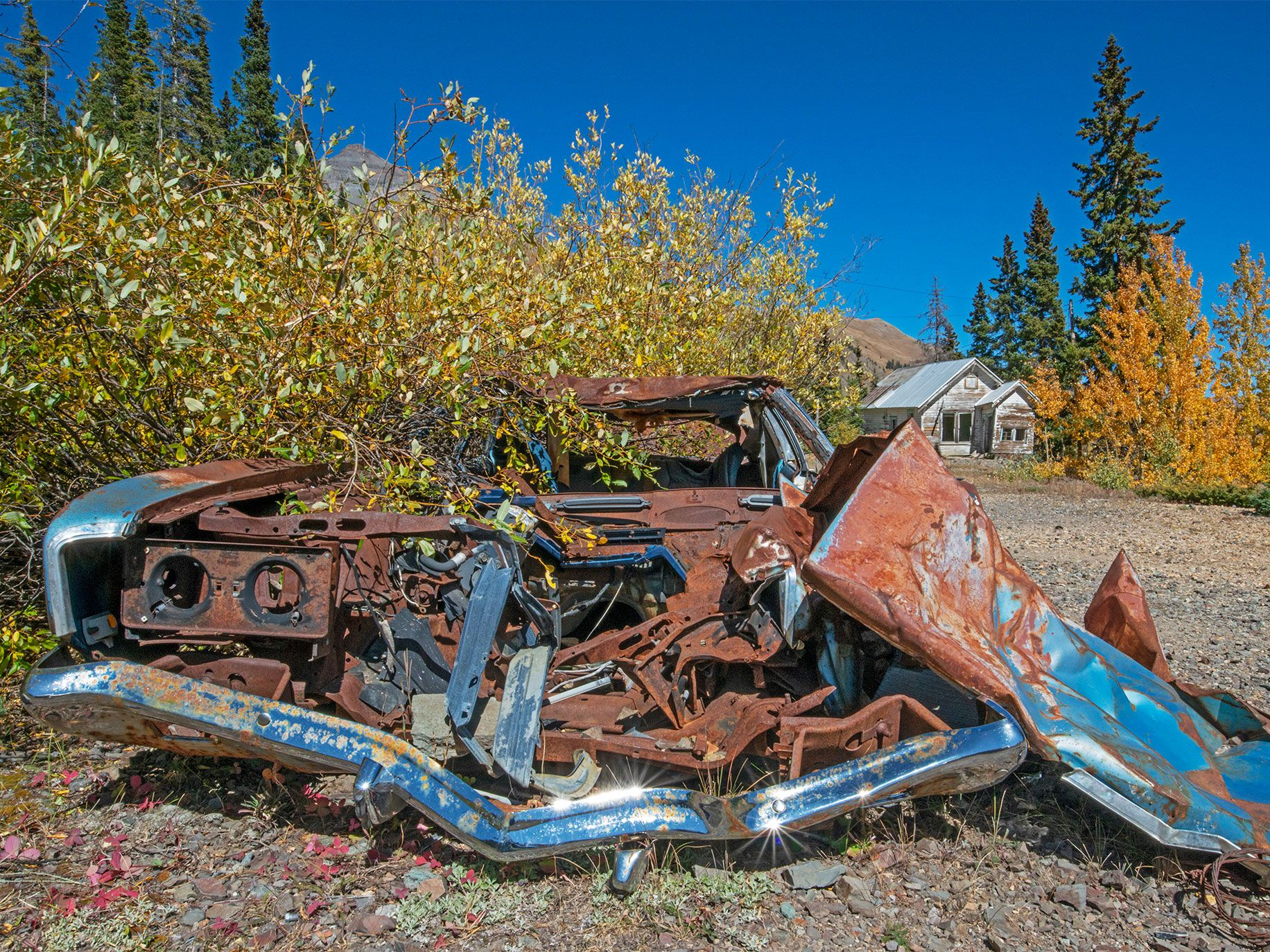 Vegetation sprouts through a vehicle abandoned at the defunct Idarado Mine.
