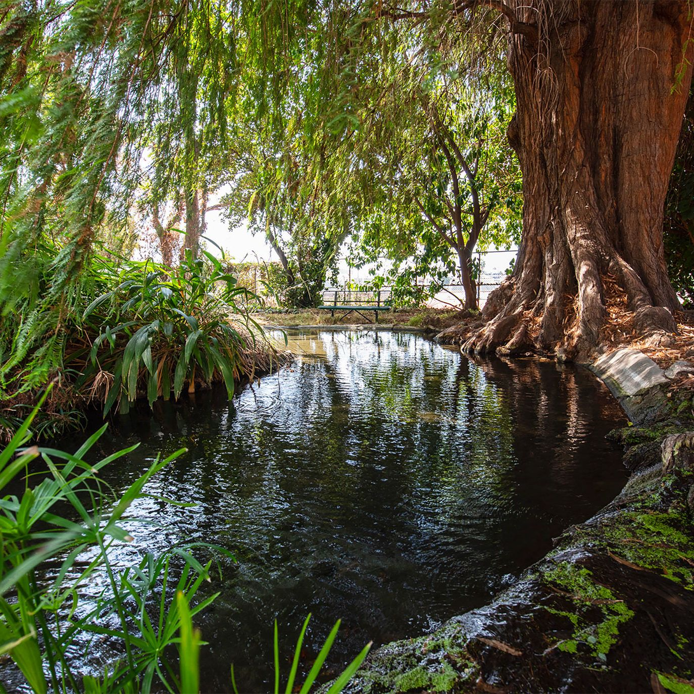 The Secret Sacred Spring in West L.A.