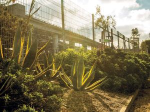 Residents of the Dogpatch and Northwest Potrero Hill neighborhoods created a tax-supported nonprofit and transformed a once desolate area bordering train tracks into a drought-tolerant, landscaped parkland.
