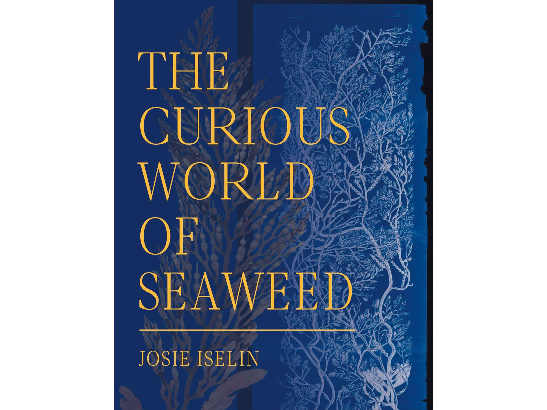 The Curious World of Seaweed, by Josie Iselin (Heyday, 256 pages, $35).