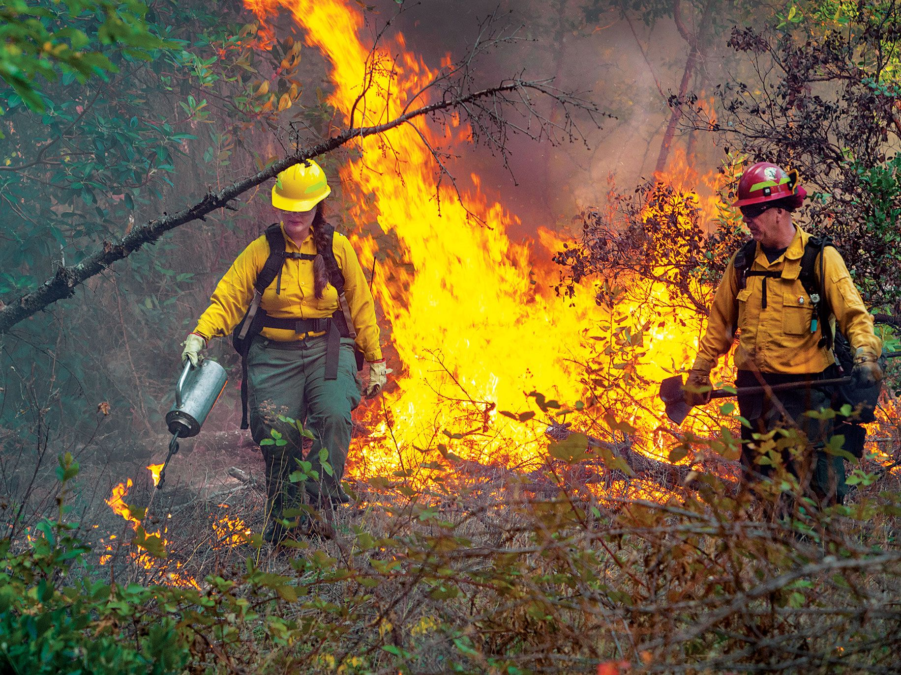TREX, which organizes controlled burns like the one pictured here, is one of dozens of tribal organizations influencing the California Department of Forestry and Fire Protection's work.