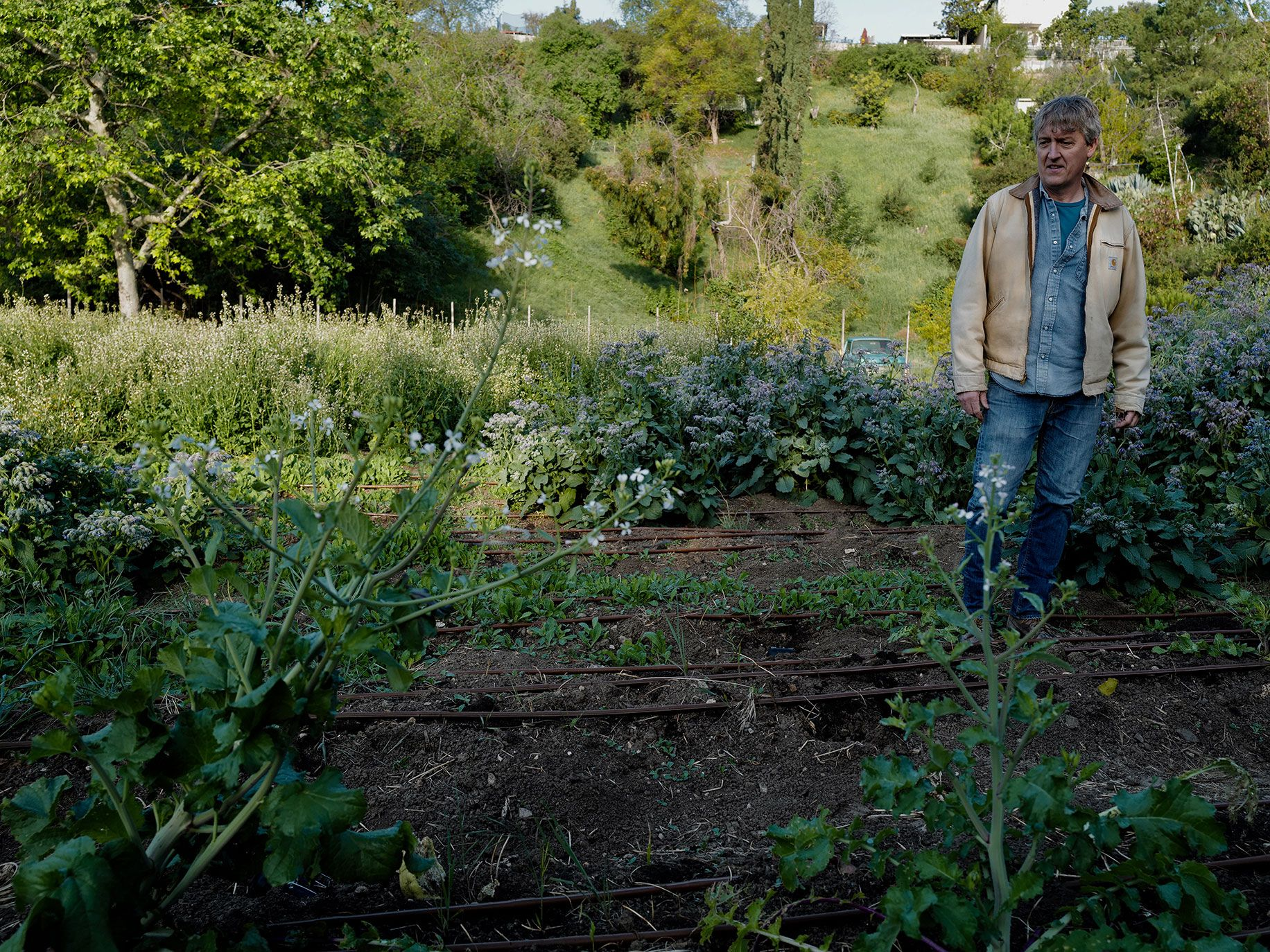 A photograph of Writer Dean Kuipers inspecting a crop of borage, arugula, radishes, mustard greens, turnips, and other cool-season crops.