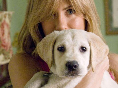 Skin, Dog, Carnivore, Dog breed, Iris, Bangs, Snout, Comfort, Eyelash, Blond,