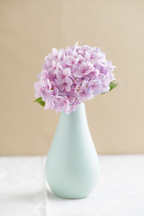Petal, Flower, Purple, Lavender, Pink, Violet, Cut flowers, Artifact, Flowering plant, Vase,