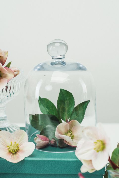 Petal, Fluid, Flower, Glass, Flowering plant, Liquid, Botany, Transparent material, Bottle, Artificial flower,