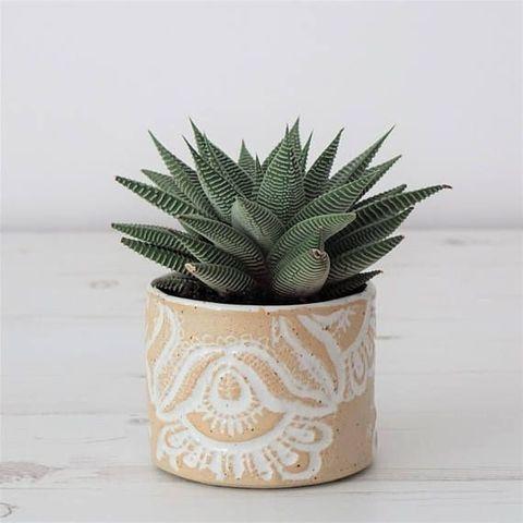 Flowerpot, Terrestrial plant, Botany, Interior design, Still life photography, Xanthorrhoeaceae, Annual plant, Houseplant, Perennial plant, Aloe,