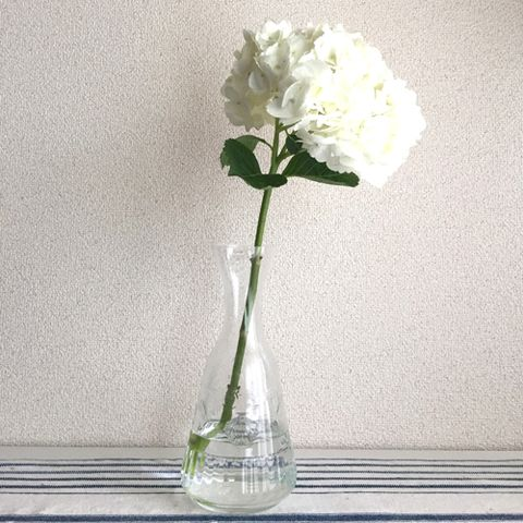 Flower, Petal, Cut flowers, Flowering plant, Artifact, Glass, Vase, Flower Arranging, Bouquet, Still life photography,