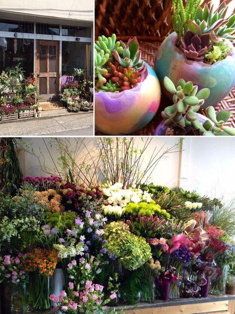 Plant, Flower, Purple, Petal, Lavender, Shrub, Flower Arranging, Floristry, Bouquet, Garden,