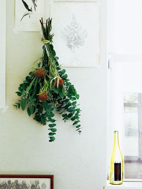 Green, Yellow, Wall, Bottle, Plant, Room, Houseplant, Wine bottle, Glass bottle, Tree,