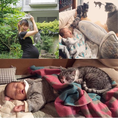 Head, Human, Arm, Comfort, Vertebrate, Small to medium-sized cats, Hand, Mammal, Felidae, Cat,