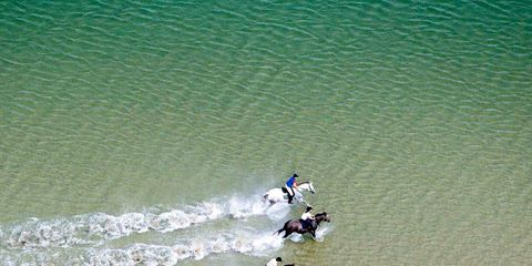 Fluid, Teal, Aqua, Ducks, geese and swans, Holiday, Beach, Wave, Duck, Water bird, Bird,