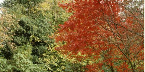 Nature, Vegetation, Deciduous, Leaf, Natural landscape, Plant community, Landscape, Shrub, Woody plant, Autumn,