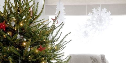 Type Of Christmas Trees.What Type Of Christmas Tree Should You Buy Christmas Decor