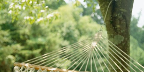 Nature, Leaf, Sunlight, Morning, Grass family, Close-up, Natural material, Hammock, Straw, Hay,