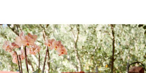 Petal, Flowerpot, Interior design, Botany, Home accessories, Still life photography, Vase, Peach, Flowering plant, Artifact,