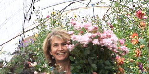 Plant, Jeans, Flower, Shrub, Denim, Petal, Garden, Botany, Flowering plant, Annual plant,