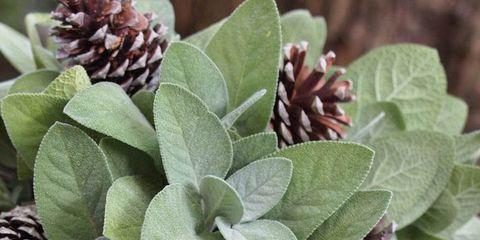 Plant, Flower, Leaf, Purple, Violet, Natural material, Lavender, Herbaceous plant, Stonecrop family, Subshrub,