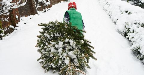 How Often To Water Christmas Tree.8 Ways To Make Your Christmas Tree Last Longer