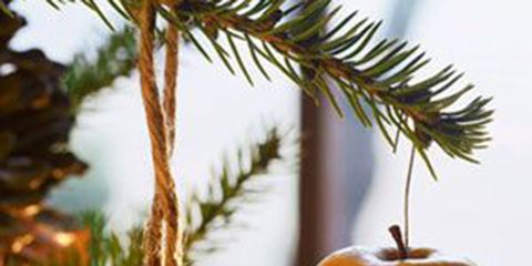 We've been decorating Christmas trees since we imported the idea in the 1800s. But the reason why we adorn our Christmas tree is an interesting one…