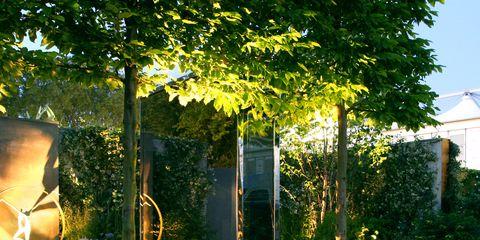 Plant, Shrub, Garden, Backyard, Yard, Landscaping, Lawn, Courtyard, Hedge,