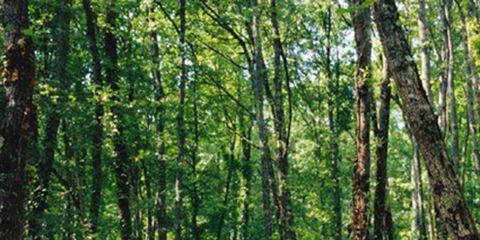 Vegetation, Nature, Green, Natural environment, Natural landscape, Deciduous, Leaf, Plant community, Forest, Nature reserve,