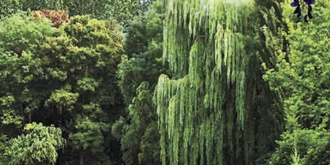 Vegetation, Plant, Shrub, Plant community, Pond, Garden, Wetland, Aquatic plant, Biome, Groundcover,