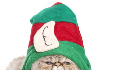 Event, Textile, Fictional character, Santa claus, Holiday, Headgear, Costume accessory, Carnivore, Christmas, Small to medium-sized cats,