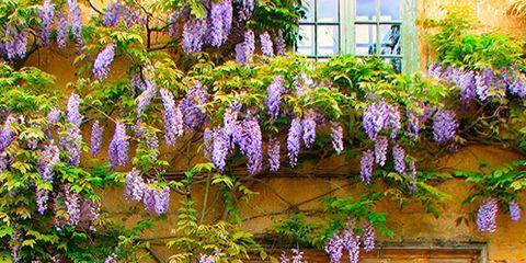 Blue, Green, Purple, Flower, Door, Wall, Lavender, Violet, Home door, House,