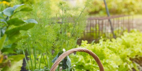 Creating A Kitchen Garden Garden Design Garden Ideas