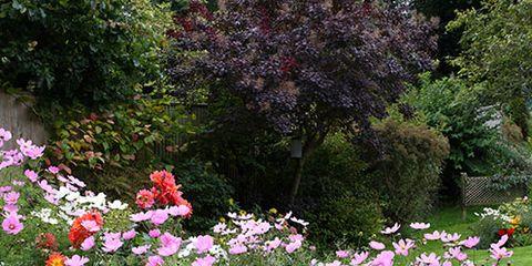Shrub, Plant, Garden, Flower, Petal, Flowerpot, Flowering plant, Botany, Groundcover, Spring,