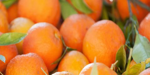 e5c7a81496 Gone almost as soon as they arrive, the Seville orange season runs from the  end of December through to mid February. Luckily these knobbly-skinned, ...