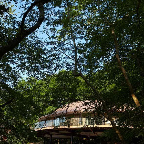 Chewton glen treehouse prices