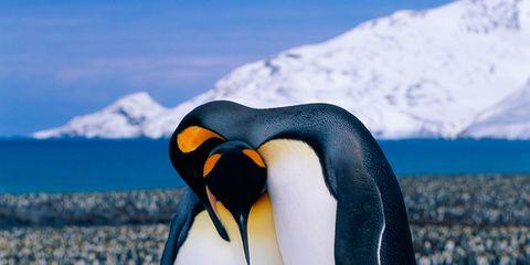 Penguin, Daytime, Winter, Natural environment, Organism, Freezing, Bird, Emperor penguin, Vertebrate, Beak,
