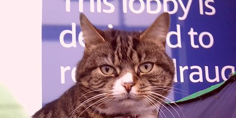 Whiskers, Vertebrate, Felidae, Small to medium-sized cats, Cat, Carnivore, Facial expression, Iris, Snout, Terrestrial animal,