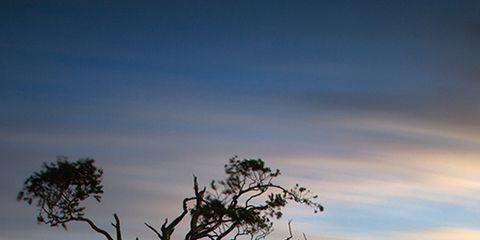 Nature, Branch, Sky, Natural environment, Natural landscape, Cloud, Plant community, Landscape, Atmosphere, Plain,