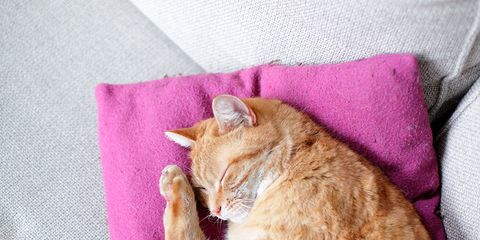 Whiskers, Carnivore, Felidae, Cat, Small to medium-sized cats, Comfort, Magenta, Fur, Snout, Violet,